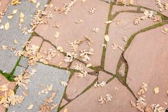 凋枯的棕色秋天在一条几何岩石道路离开 免版税库存照片