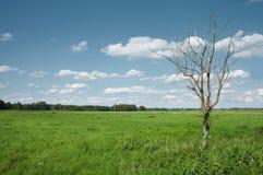 凋枯的结构树 免版税库存照片
