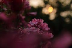 凋枯的花和日落 免版税库存图片