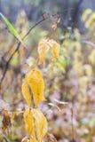 凋枯的草背景在10月在森林里 免版税库存图片