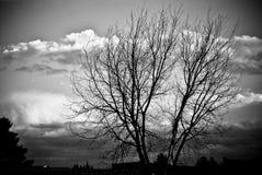 凋枯的结构树 库存照片