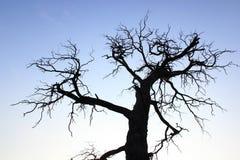凋枯的结构树 库存图片
