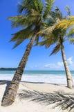 凌家卫岛棕榈树 库存图片