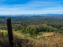 减少全球性变暖的绿色森林 库存图片