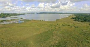 减少在马歇尔湖上黄色芦苇和灌木的高度  股票录像