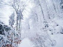 减少的多雪的道路穿过山坡的一个森林冬天黑暗和有薄雾的森林 免版税库存图片