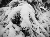 减少的多雪的道路穿过山坡的一个森林冬天黑暗和有薄雾的森林 库存图片