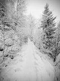 减少的多雪的道路穿过山坡的一个森林冬天黑暗和有薄雾的森林 图库摄影