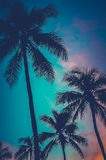 减速火箭的日落夏威夷棕榈树 免版税库存照片