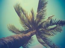 减速火箭的被过滤的唯一棕榈树 库存图片