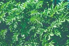 减速火箭的过滤器绿色灌木 免版税库存照片