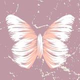 减速火箭的蝴蝶 图库摄影
