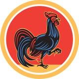 减速火箭鸡雄鸡前进的走的圈子 免版税库存照片