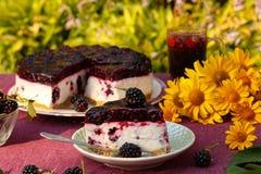 凝乳蛋糕用黑莓桌位于反对绿色灌木背景的庭院  图库摄影