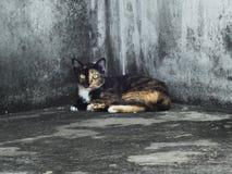 凝视一只唯一的猫  库存照片