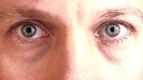 凝视入照相机的两双灰色蓝眼睛 免版税库存图片