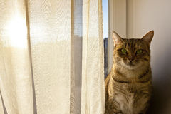 凝视入照相机的猫和坐窗台板 图库摄影