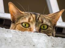 凝视在具体壁架的猫 免版税图库摄影