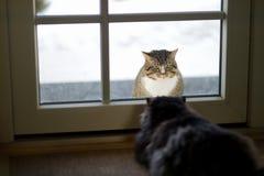 凝视彼此的两只猫 免版税库存图片