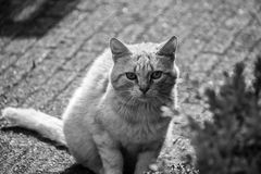 凝视照相机的可爱的猫 库存图片