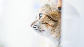 凝视猫外形 库存图片