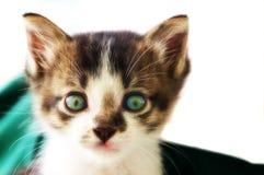 凝视猫的照片直接 免版税库存照片