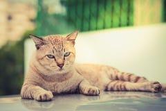 凝视的猫眼严厉地 免版税库存照片