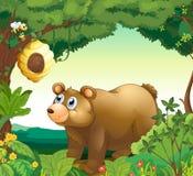 凝视蜂箱的一头大棕熊 免版税库存图片