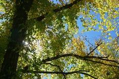 凝视通过叶子的闪耀的太阳 库存照片