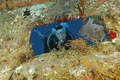 凝视从在海难- Roatan的开头的轻潜水员 库存图片