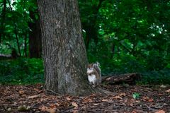 凝视squirrl 库存图片