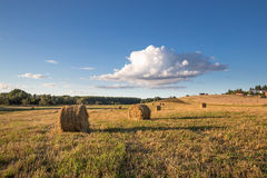 几个圆的干草堆,点燃由落日,在一个二面对切的草甸在与一朵大云彩的蓝天下 库存图片
