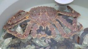 几个大桃红色螃蟹在坦克坐在鱼市上 影视素材