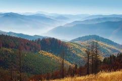 几个死者烘干了在小山中的杉木 库存图片