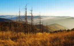 几个死者烘干了在小山中的杉木 库存照片