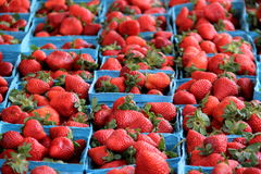 几个蓝色容器用新鲜的摘的草莓填装了,被显示在地方农夫市场上 免版税库存图片