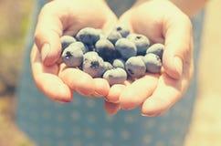 几个蓝色蓝莓在女性手上 免版税库存照片