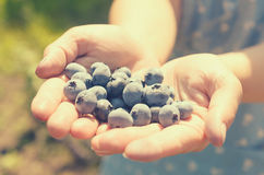 几个蓝色蓝莓在女性手上 免版税库存图片