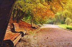 几个长木凳连续在叶子机盖下  免版税库存照片