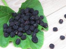 几个黑莓 免版税库存照片