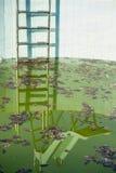 几乎与肮脏的水和梯子的空的水池 免版税库存图片