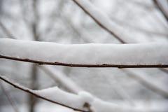 几乎在分支的雪 免版税图库摄影