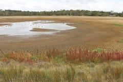 几乎干盐湖床与植物群和鸟生活 库存图片