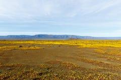 几乎平展Tankwa南部非洲的干旱台地高原国家公园黄色风景  免版税库存照片