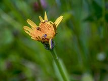 几乎暗藏的一只微小的甲虫 免版税库存图片