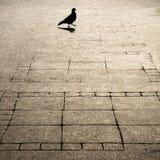 几何仿造了城市边路和一pegeon剪影shado 图库摄影