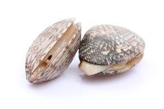 几只新鲜的蛤蜊 免版税库存照片