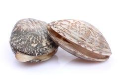 几只新鲜的蛤蜊 图库摄影