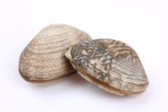 几只新鲜的蛤蜊 免版税库存图片
