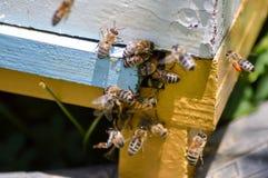 几只蜂返回 免版税库存图片
